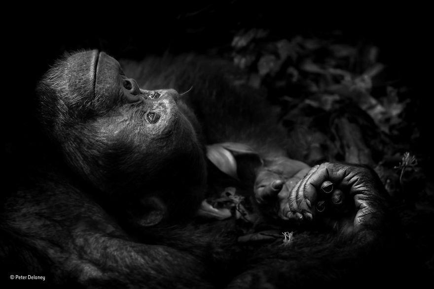 Wildlife Photographer Of The Year 2017: главные победители в снимках о живой природе