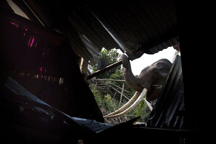 Слон, как бульдозер для сноса (16 фото)