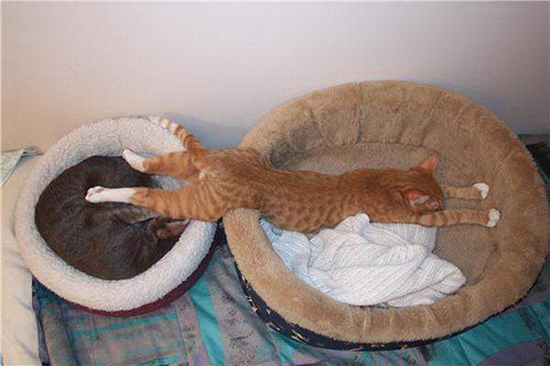 5. Двойная кровать.    Для этой позы вам понадобится партнер. Цель – не столько комфорт, скольк