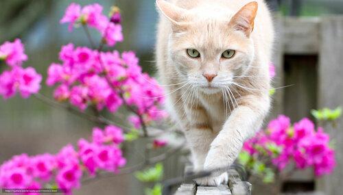 Кот_цветы2.jpg