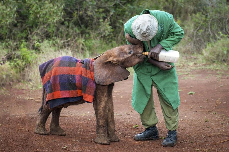 слоны, слонята