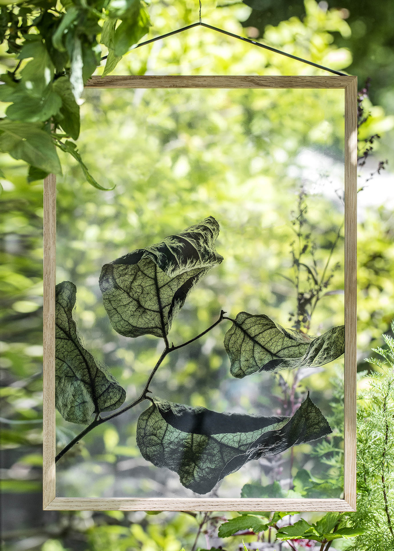Floating Transparent Leaf Prints