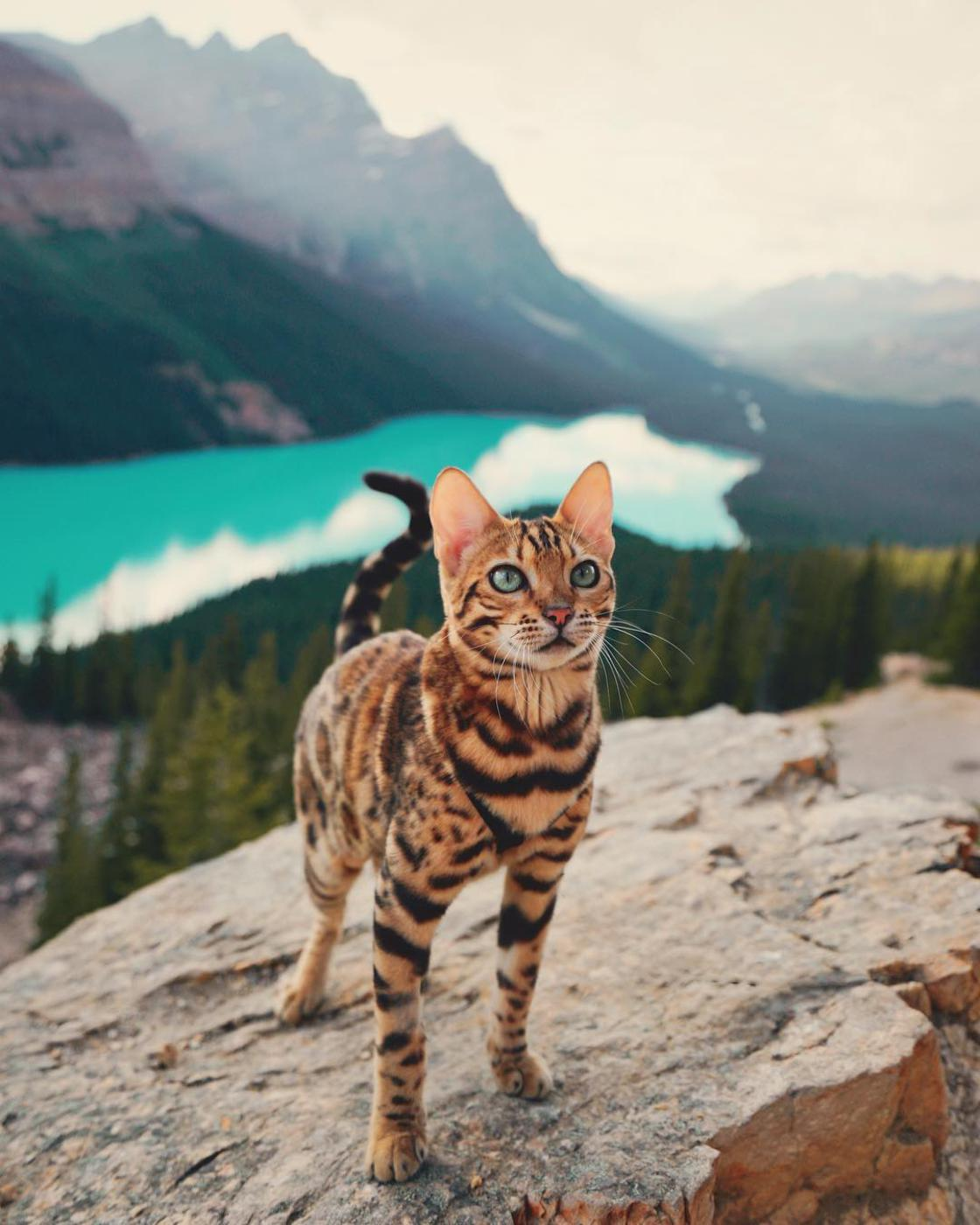 Suki The Cat - Les aventures d'un chat a travers le Canada sauvage