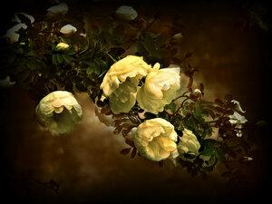 Кустовые розы.