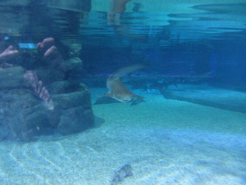 Гонконг - Oкеанический парк - Акула