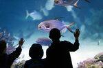 Прикоснуться к подводному миру