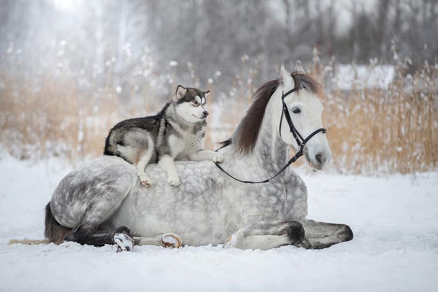 Подборка интересных и веселых картинок 21.01.18