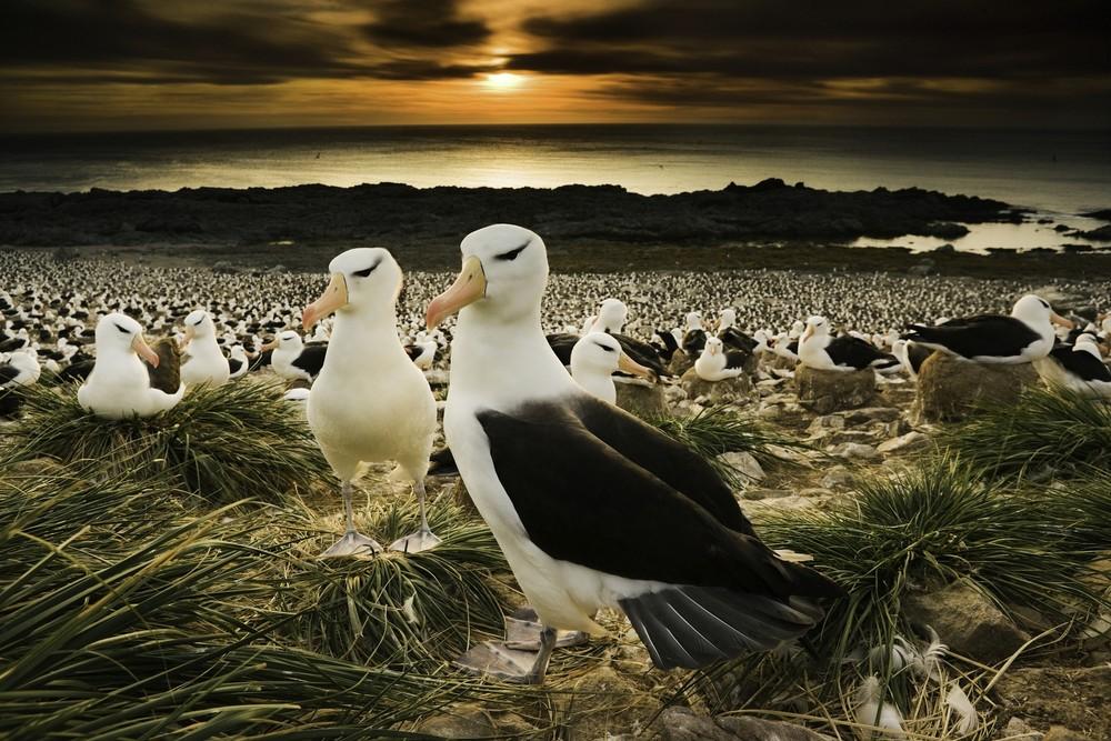 Замечательные фотографии Арта Вулфа