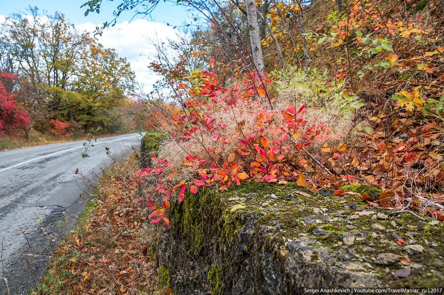 5. В таком цветном обрамлении даже ушатанные дороги в районе Феодосии-Судака выглядят красиво.