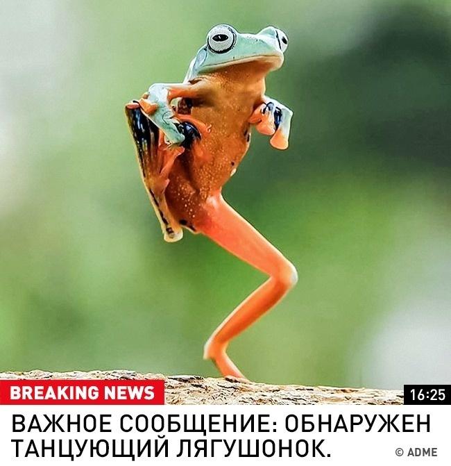Один новостной выпуск изидеальной вселенной