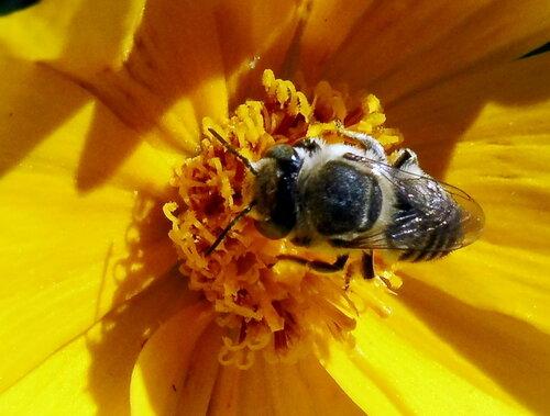 В солнечном цветке
