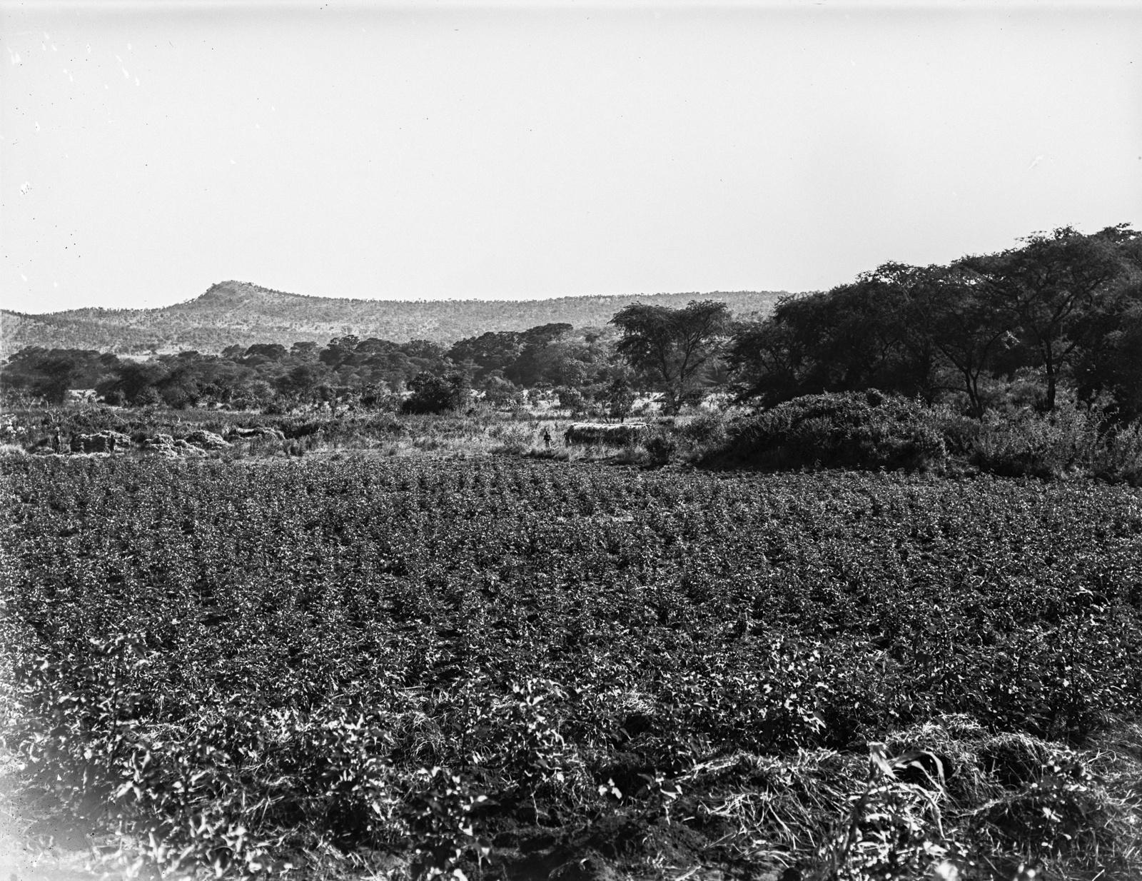 117. Вид поля. На заднем плане холмы