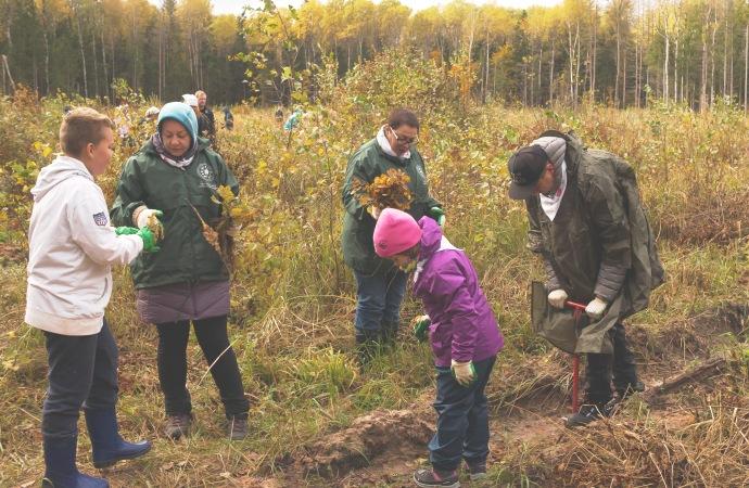 Несколько тысяч сеянцев клена и дуба высадили волонтеры в калужском национальном парке