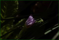 http://img-fotki.yandex.ru/get/769553/15842935.5ef/0_108dfc_2429bc10_orig.png