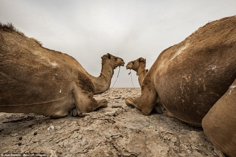 «Воздух такой сухой, что в пустыне ничем определенным не пахнет. Тем не менее возле некоторых затопл