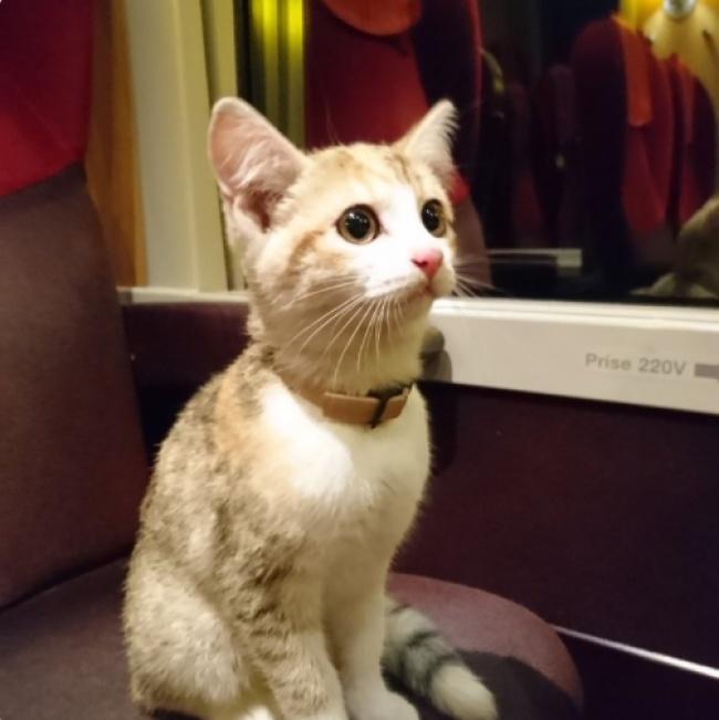 Потерявшийся котенок впоисках хозяйки проехал 20км напоезде. Инашелее! (2 фото)