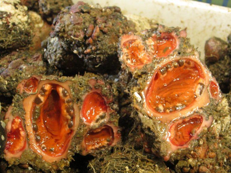 Живые камни (1 фото)
