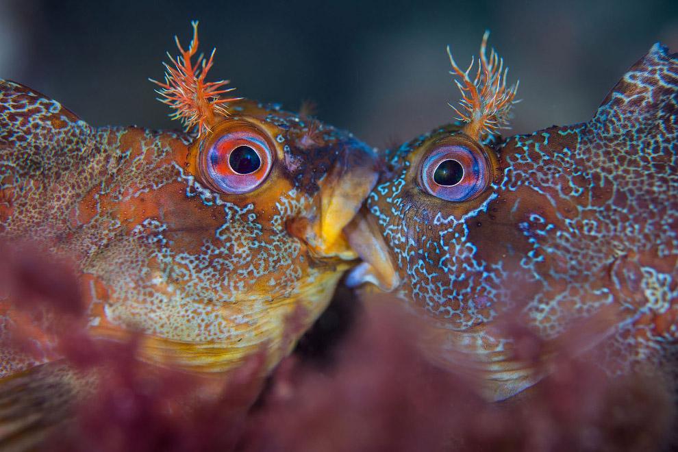 море HD животные конкурс острова природа рыба