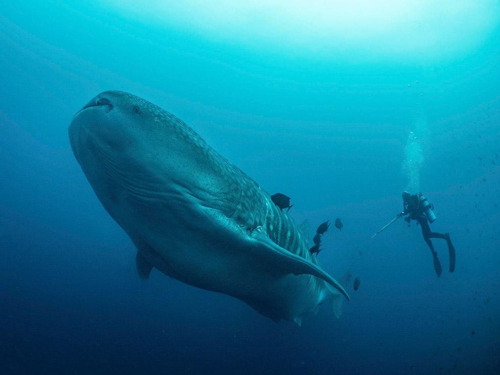 HD акулы море