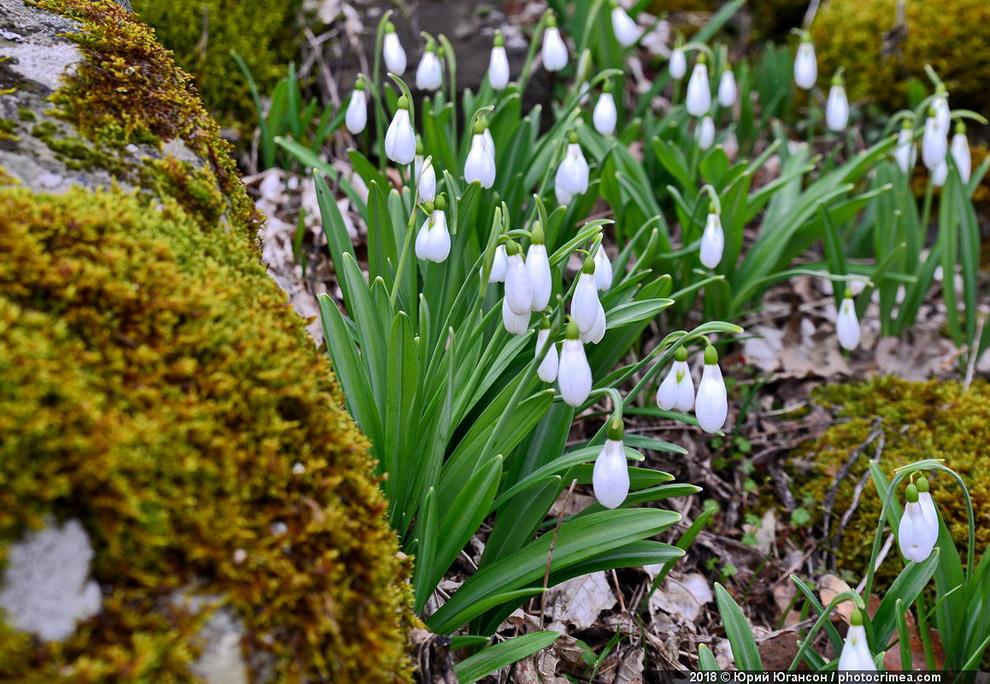 Крым март 8 марта время самые тепло небо