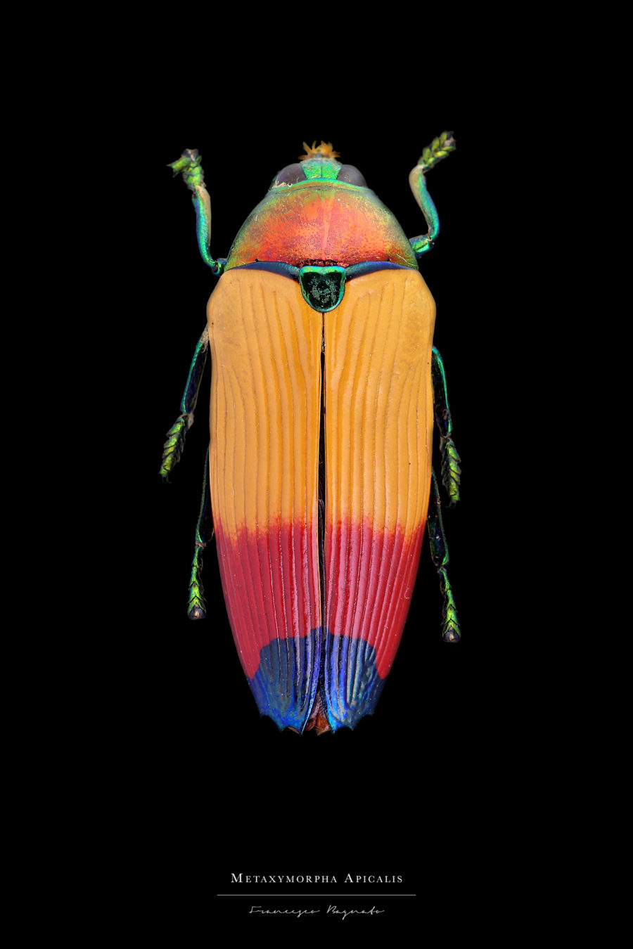 Stunning Pictures of Colourful Insects