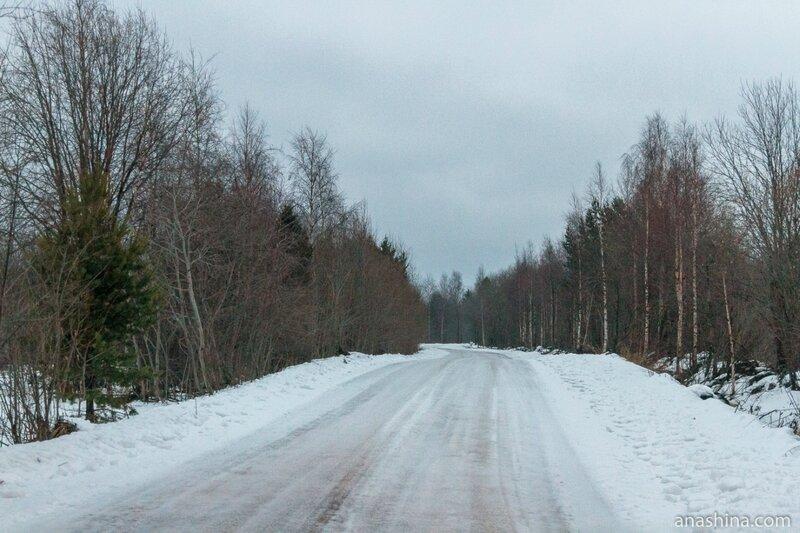 Дорога в лесу, Вологодская область