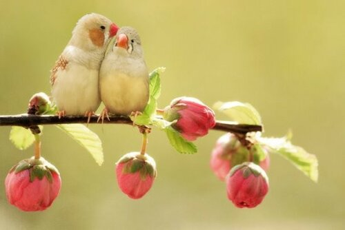 Один мудрец сказал: «Самое лучшее лекарство для человека — любовь и забота»… Кто-то переспросил: «А если не поможет ?» Мудрец ответил: «Увеличьте дозу!»