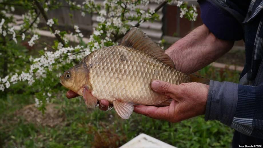 С сегодняшнего дня в Украине начал действовать запрет на вылов рыбы