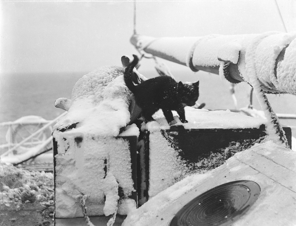 Cat on Steam Yacht Morning, 1902