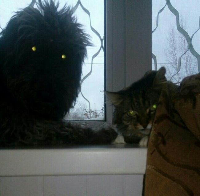 © pikabu.ru      Кот, укоторого наспине тоже нарисован кот. Причем «спинной кот»