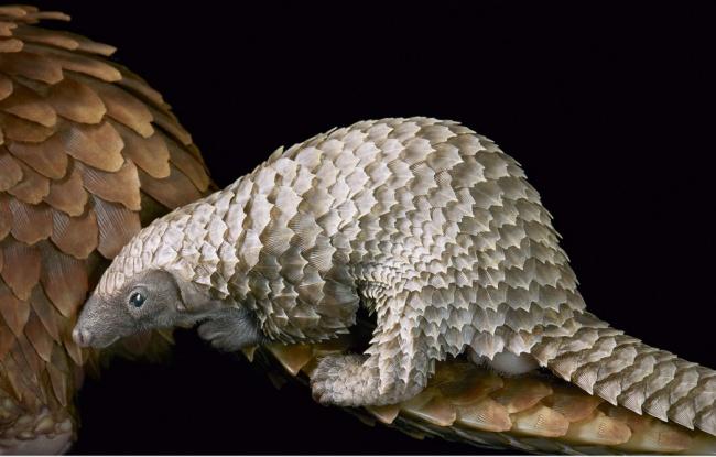 © timflach     Это экзотическое животное обитает вовлажных тропических лесах, саваннах о