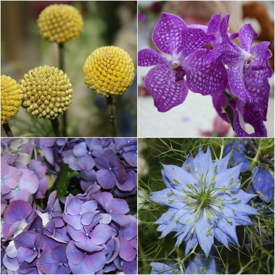 Цветы, приносящие радость!