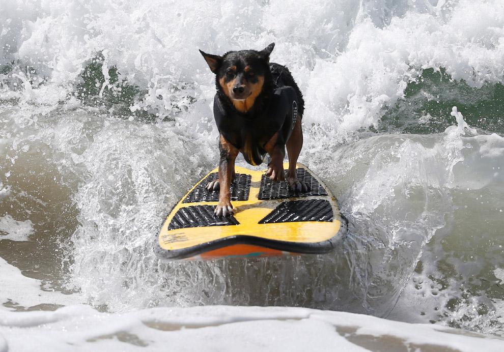 Калифорния пляж позитив серфинг
