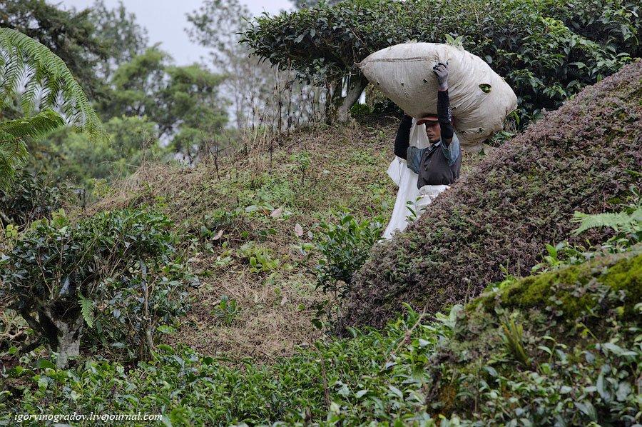 Малайзия чай общественный транспорт горы гора плантация столица штаты