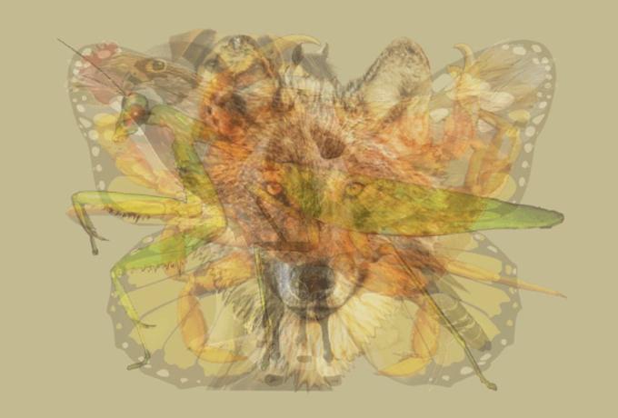 Тест  - Сколько животных на снимке