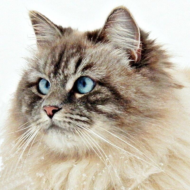 Ах эти глазки голубые !