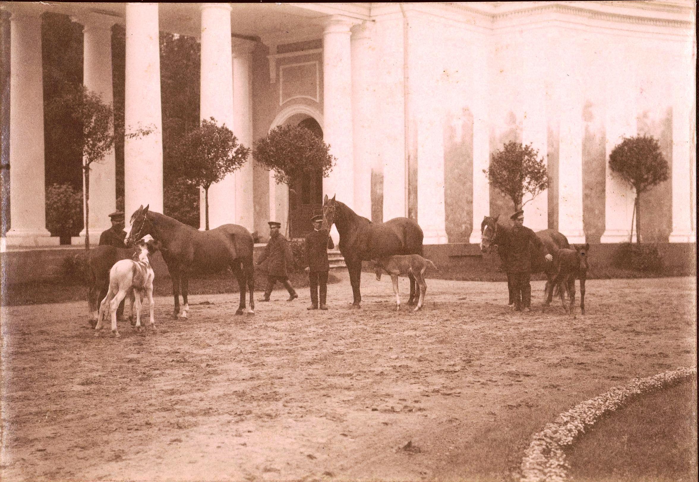 Парадный двор. Лошади с жеребятами. Рядом рабочие. 1890-е