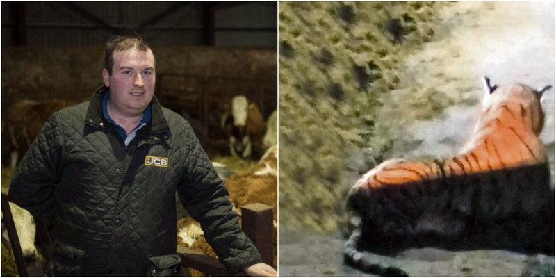 Шотландские полицейские 45 минут противостояли тигру, который оказался плюшевой игрушкой