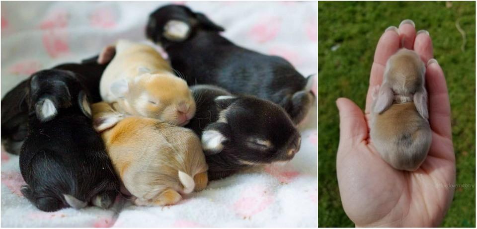 «Blue Clover Rabbitry» — рай для любителей кроликов