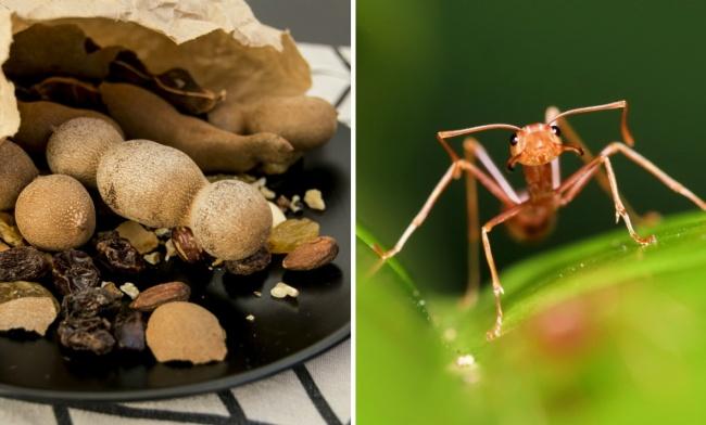 Среди древних дезодорантов есть весьма необычные. СXVII века внекоторых странах применяли муравьин