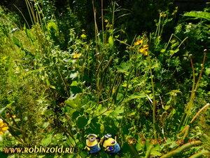 засилье сорняка