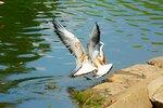 Чайкины разборки