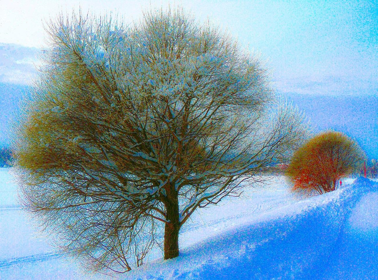 irina-fortuna-tsaritsino-winter 10.jpg