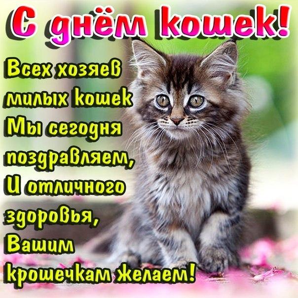 С днем кошек. Поздравляем их хозяев открытки фото рисунки картинки поздравления