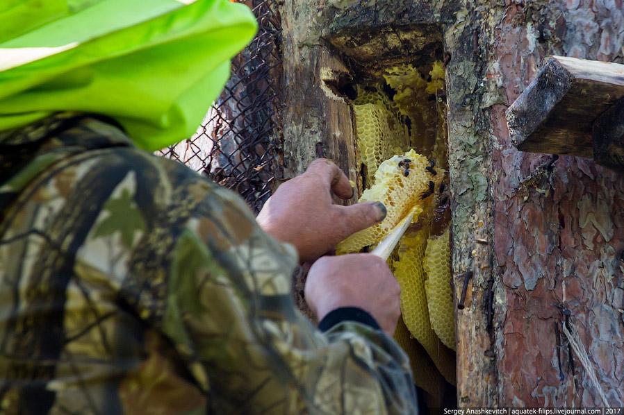 13. Бортевик закрывает гнездо и его не будут открывать уже до весны. Зимовка самый ответствен