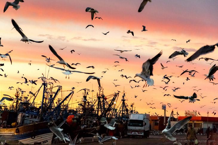 Море птиц в Марокко (31 фото)