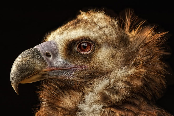 Портреты животных. Часть 2 (25 фото)