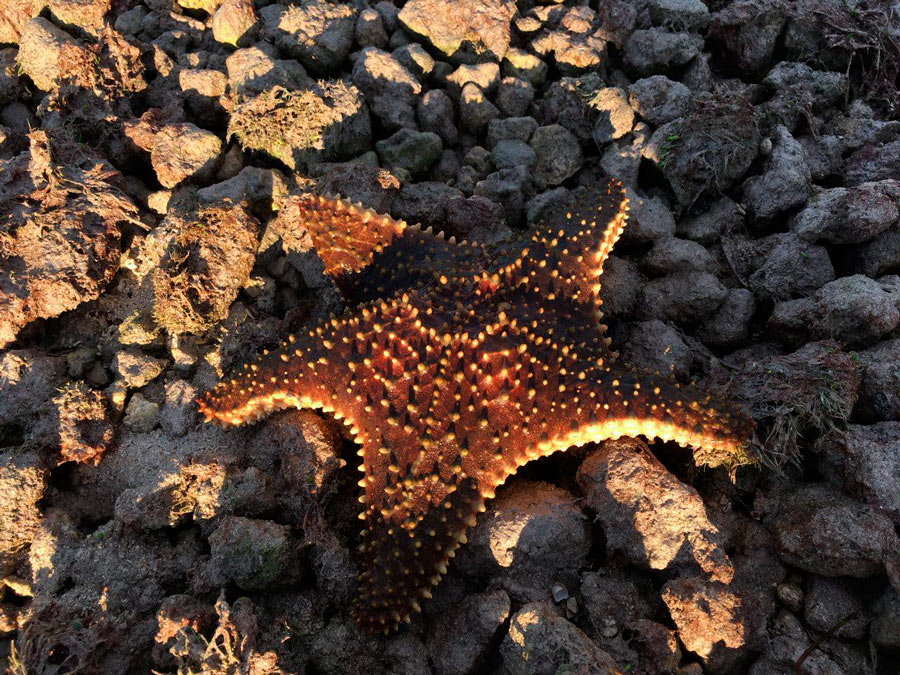 Florida keys. Starfish