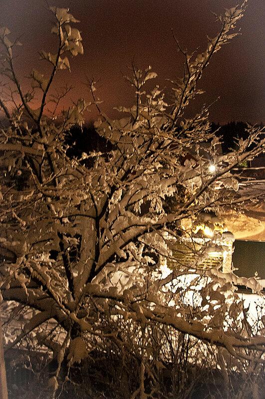 Снегопад_DSC_4409.jpg