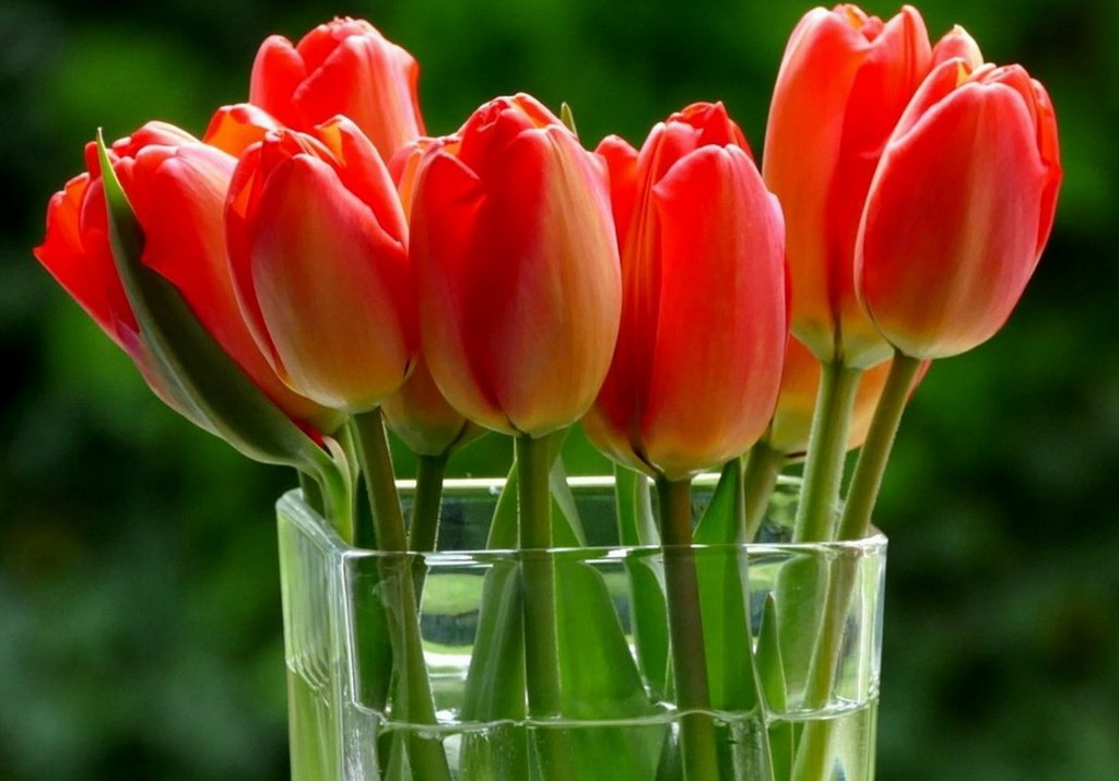 тюльпаны ваза море  № 1012836  скачать